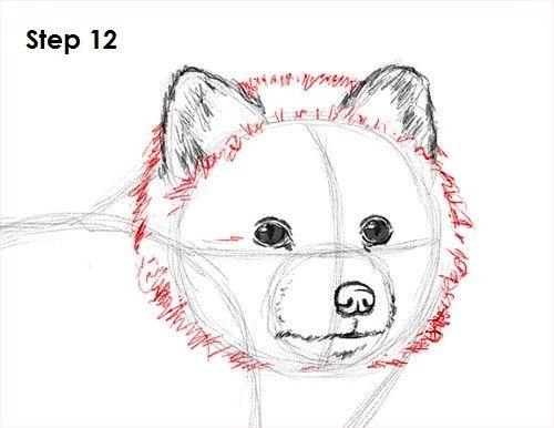 How To Draw An Arctic Fox Med Billeder Tegninger