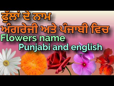 The Best Daisy Flower Meaning In Punjabi And Pics In 2020 Daisy Flower Meaning Flower Meanings Lily Flower