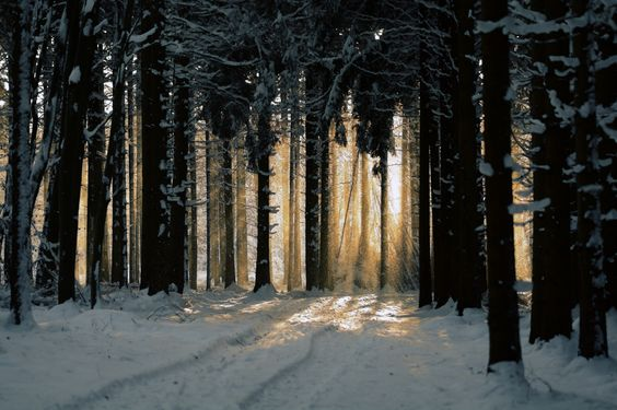 Follow the Light by Andreas Steegmann on 500px