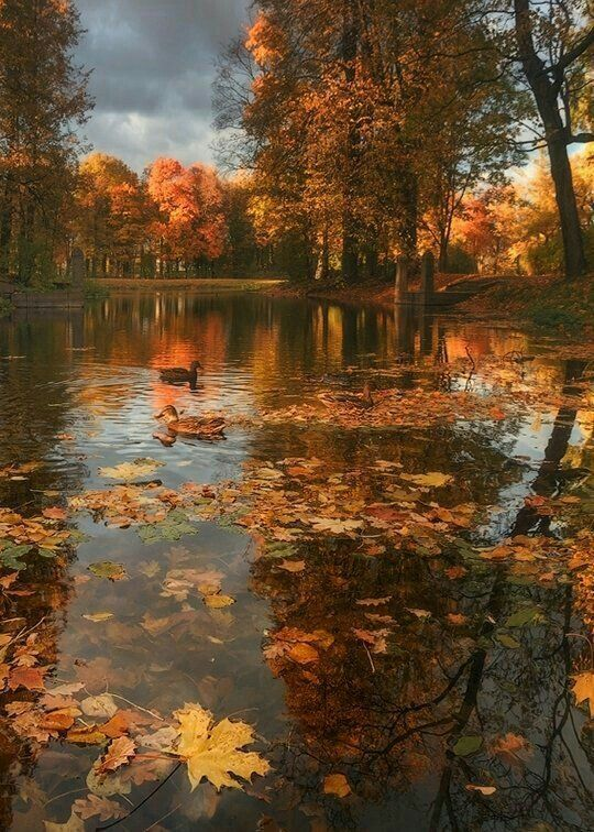 Autumn Lake J Autumn Scenery Autumn Scenes Beautiful Landscapes