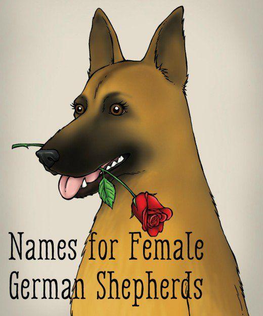 55 Best Dog Names For German Shepherd Puppies Female German