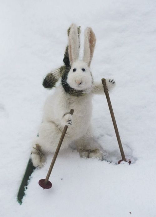On his way to Spring Time #easter #bunny: