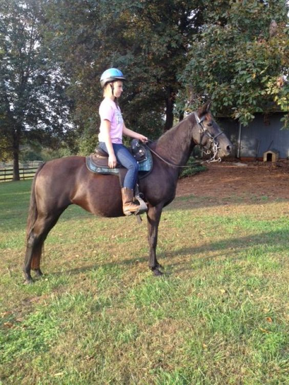 Rockie's Mystery Queen - Black Tennessee Walking Mare in Satesville, North Carolina 28625