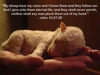His sheep are safe with him.  He is the Good Shepherd. He will lose not a one!