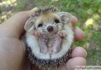 Des bébés animaux trop mignons :3