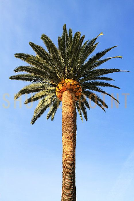 branch and palm trees essay Are you noticing your tree's health declining you may have an invasive pest or disease present in your trees.