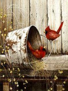 Cardinal's...John Rossini                                                                                                                                                     More: