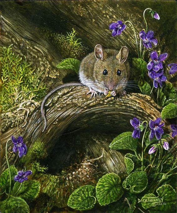 The Art of Dick Twinney - Cornish Wildlife Artist: