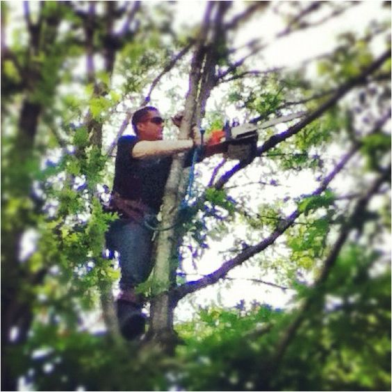 Tree trimming!!