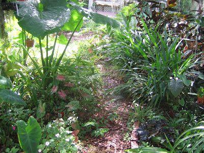 Oak tree florida gardening and trees on pinterest - The garden web forum ...