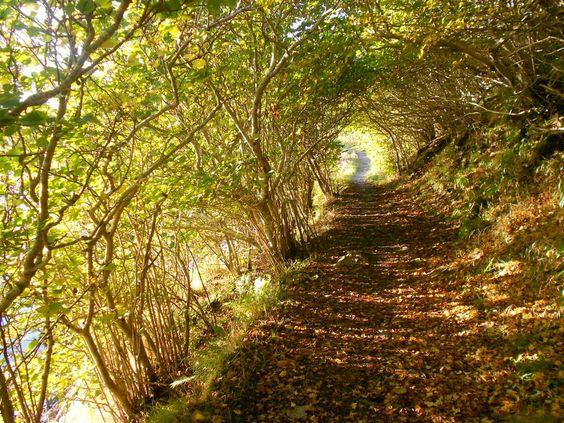 Path in Scotland; photo by Robyn Boyd http://www.lauradavis.net/cometoscotland