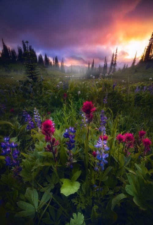 sweetd3lights:    ByDaniel Greenwood