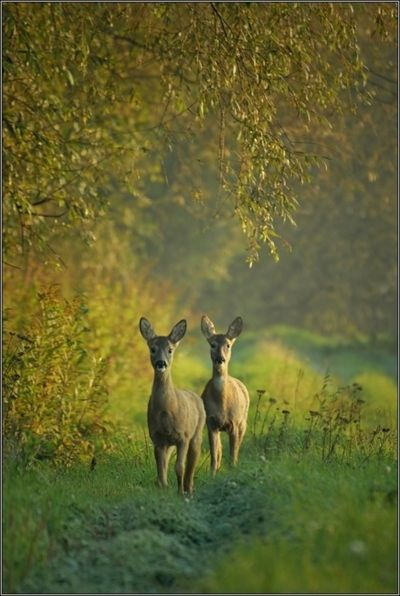 *Deer come to visit...every night:)