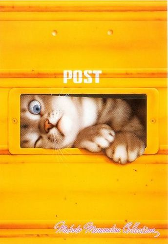Chat dans une boîte aux lettres
