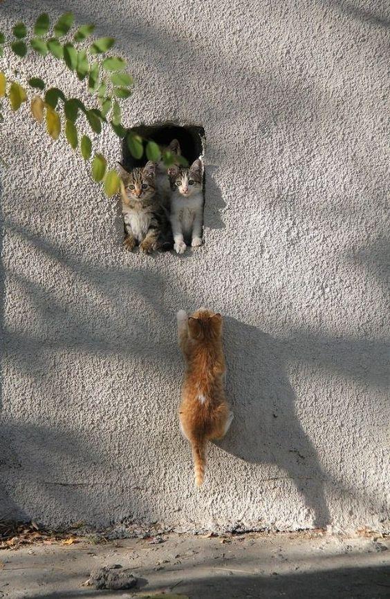 AStuce soigner sont chat naturelle 2d8263a32ef0dc5a58c4cd0f97ee342d