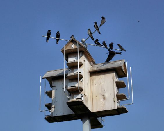 Free Purple Martin House Plans   All the mums and dads are flying back home.