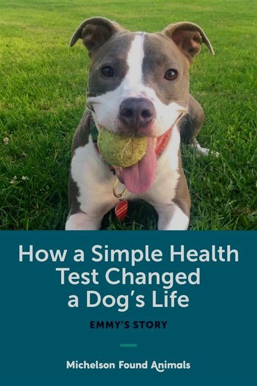 Dog Training Fetch Acme Dog Training Yakima Wa Dog Whisperer