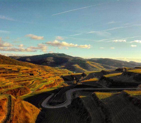 On instagram by matt84fr #landscape #contratahotel (o) http://ift.tt/1nJh6m8 Neunlinden am Kaiserstuhl 29|01|16  #kaiserstuhl #neunlinden #texaspass #südbaden #germany  #beautifulday #reben #vineyard #pictureoftheday #januar #january #natur #nature #heimat #badischerwein