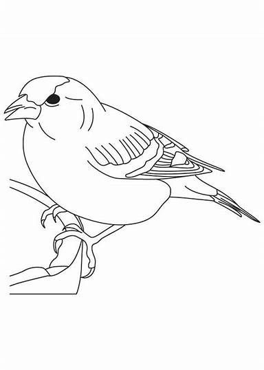 Chickadee Bird Coloring Pages Bing Bird Coloring Pages