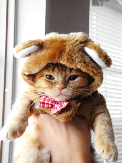 Cat: I will set you on fire when you're asleep. @Michela Andrus we should get this costume for CC