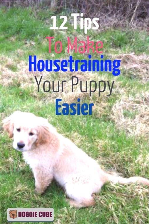 Large Dog Training Collar Dog Training Programs Sportdog