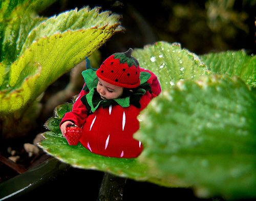 Strawberry puff costume   behind leaf by grosgrainfabulous, via Flickr