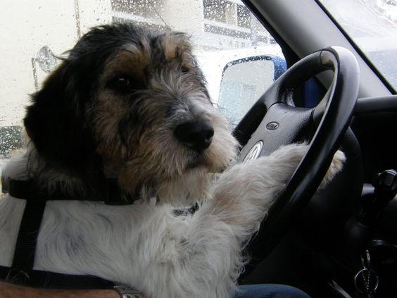 viajar a francia con perro
