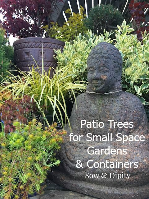 Patio trees for small gardens trees patio and small spaces - Trees for shade in small spaces concept ...