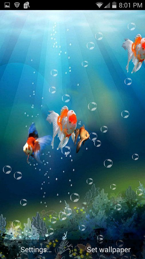 Goldfish In Phone 3d Live Wallpaper Free For Android Mobile Phone Live Wallpapers Moving Wallpapers For Android Android Wallpaper