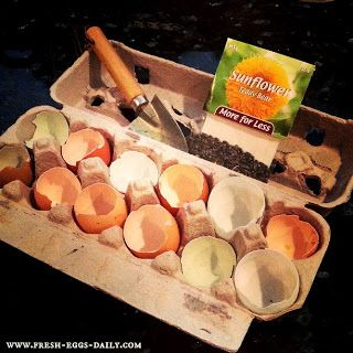Planting sunflower seeds in eggshell 'cups' When the seeds sprout, just crush the shell a bit and plant the whole thing in the ground. Can also plant tomatoes or other veggies the same way.