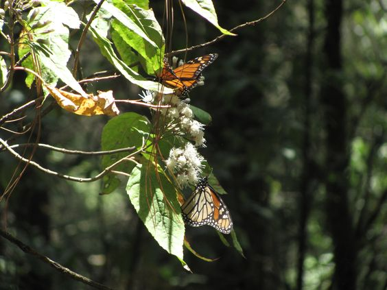 Valle de Bravo y las Mariposas / Valle de Bravo and the butterflies