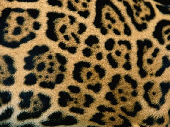 Image result for jaguar patterns
