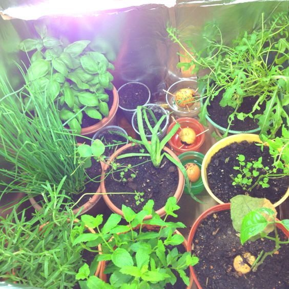 Green houses, Rockets and Basil on Pinterest