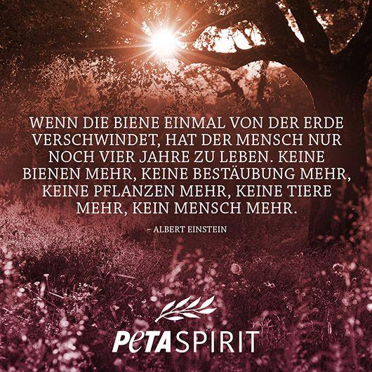 Peta Spirit Alle Zitate Mit Bilder Von Peta Spirit Auf Einem Blick Albert Einstein Zitate Einstein Zitate Veganer Zitate