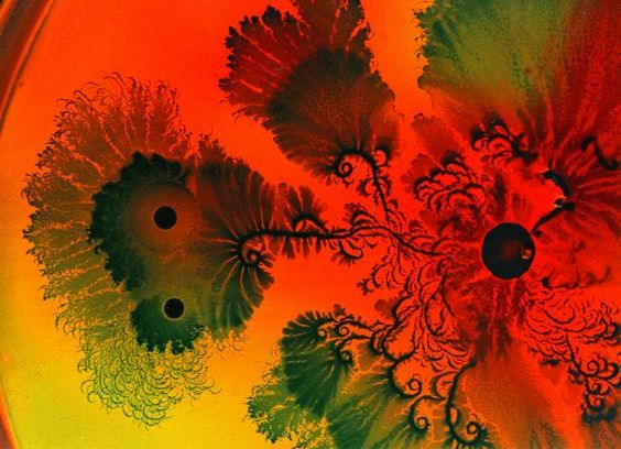 Virus, mold and bacterial aggregate colonies spontaneously assume Fractal Shapes
