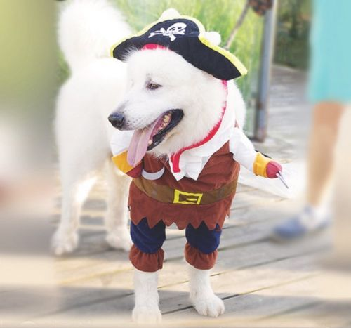 Pet Dog Costume Pirates Of The Caribbean Style For Styling Pet Dog
