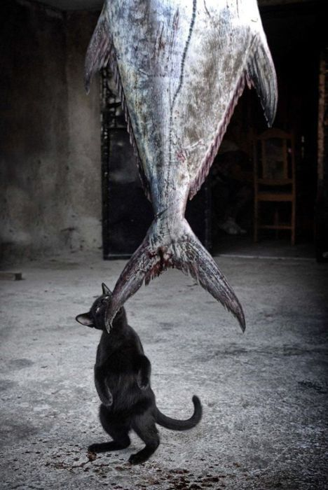 A little black cat for a big fish...   So cute. The Incensewoman