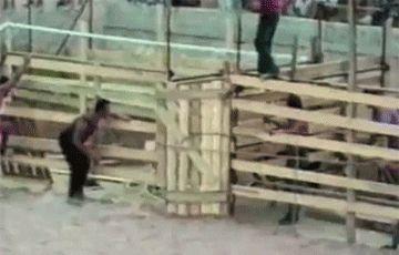 Freedom - Animals -