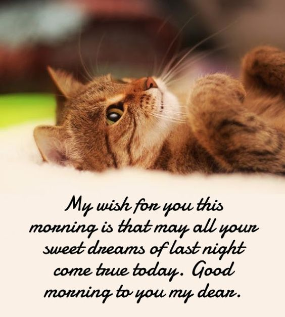30 beautiful good morning love quotes for her good