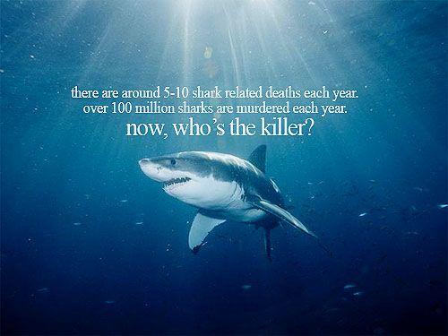 shark finning speech essay Shark finning and the shark population 9 pages 2213 words august 2016.