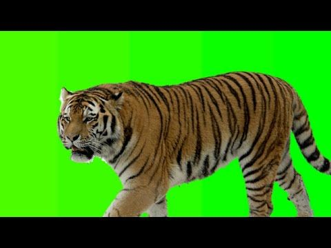 Animals Green Screen For Android Apk Download 8