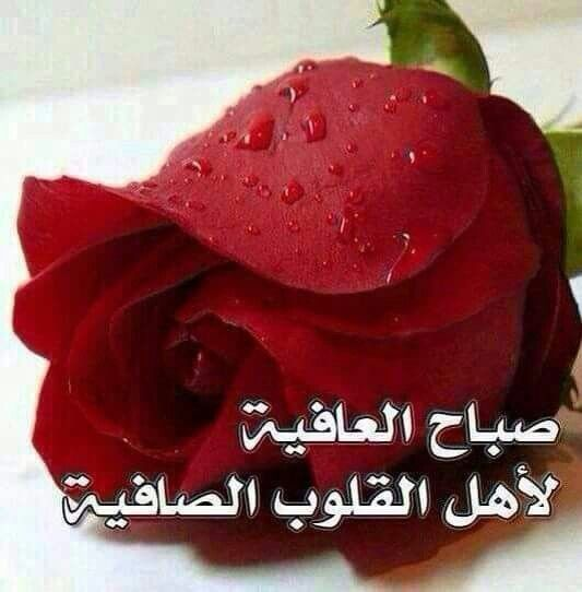 صباح العافيه Good Morning Arabic Beautiful Morning Messages Good Morning Greetings