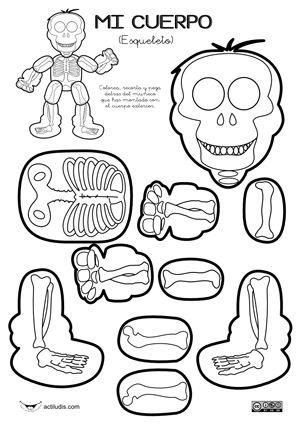El cuerpo humano, por dentro y por fuera