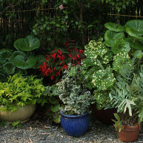 Pin On Garden Design Ideas Tips And Inspiration
