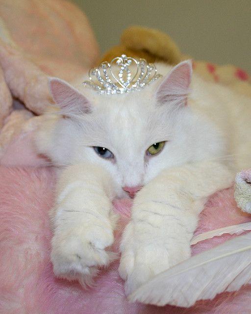 I want this princess kitty!