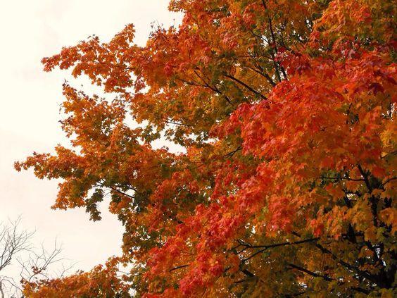 Fall colors, High Park, Toronto
