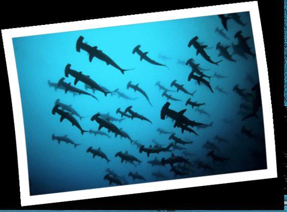 diving....  http://www.latiendadelbuceo.com