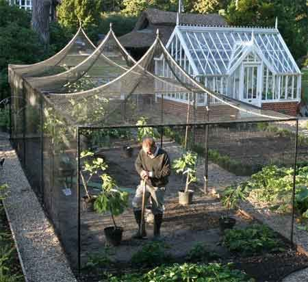 Fruit cage - Protects against some kinds of pests that might steal the fruit.: