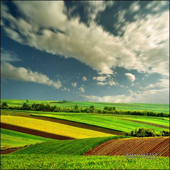 Pannonian Plain, Serbia by Katarina 2353 on flickr