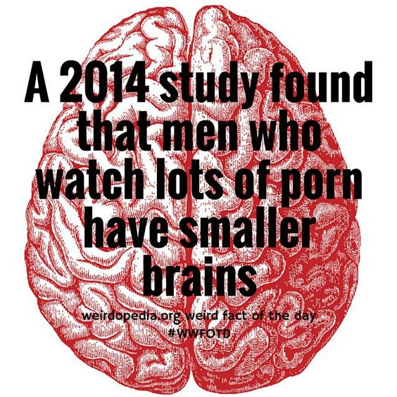 I'm not sure I can agree with the results of this study. #wwfotd #weird #weirdfacts #weirdopedia #men #brains